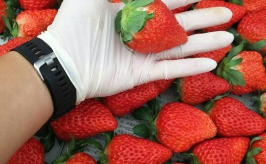 イチゴ大量
