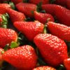 イチゴ「紅ほっぺ」